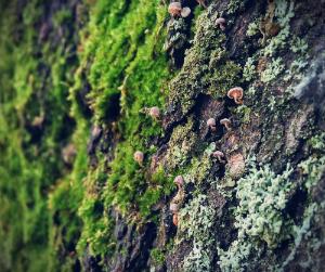 lichen vitamin d