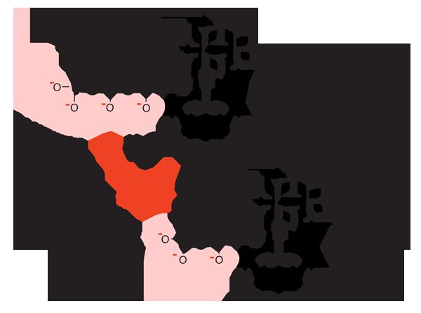 diagram of ATP Adenosine Triphosphate