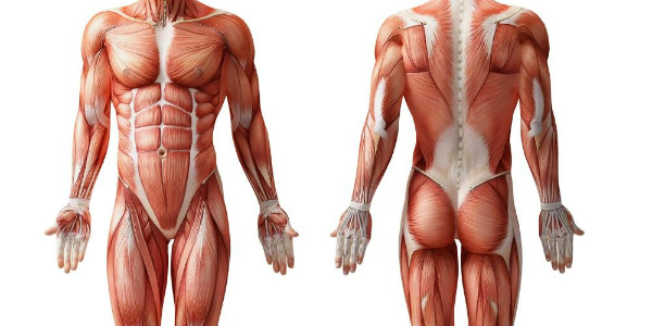 pulled muscles magnesium repair