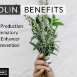 Luteolin Benefits