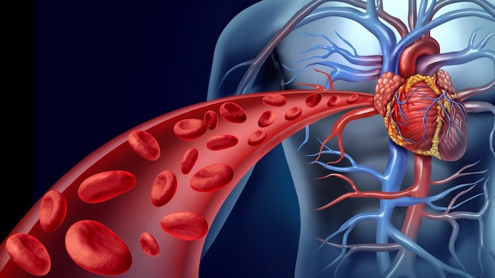 blood flow to the heart